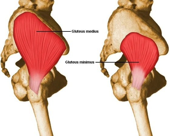A Simple and Effective Gluteus Medius Exercise